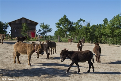 "Romania, Cernavoda,  ""Footprints of joy"", refuge for donkeys"